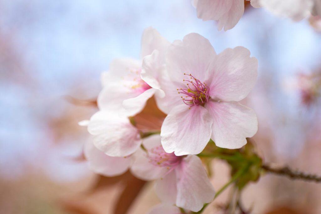 すっかり春めいてまいりました。画像