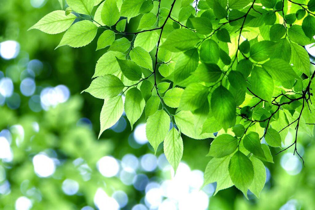 薫風緑樹をわたる好季節となりました。画像